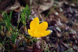 Signs of Spring - February 2017 - ©NinaMcIntyre