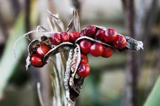 Winter Berries - January 2017 - ©NinaMcIntyre