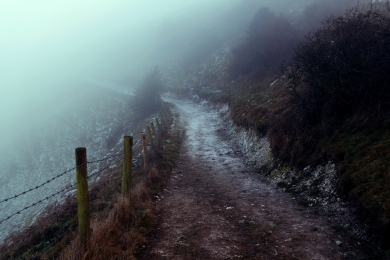 Into the Mist - January 2017 - ©NinaMcIntyre