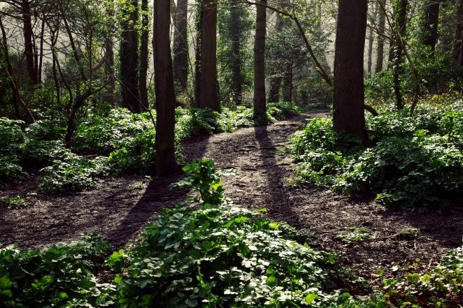 Forest Floor - March 2017 - ©NinaMcIntyre
