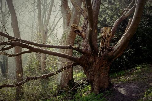 Odd Tree - March 2017 - ©NinaMcIntyre