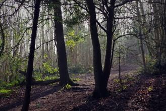 Forest Light - March 2017 - ©NinaMcIntyre