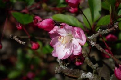 Spring Blossom - March 2017 - ©NinaMcIntyre