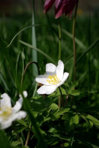 Little White Flower - March 2017 - ©NinaMcIntyre